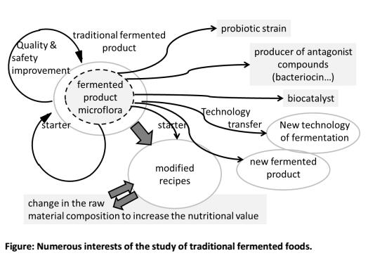 Fermentation in food processing